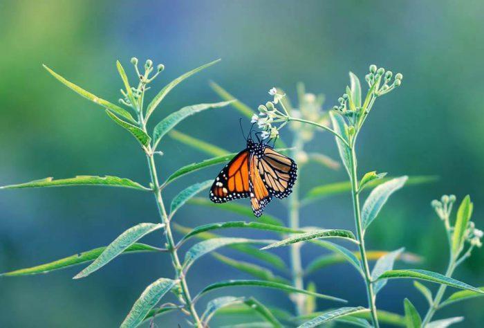 nature-blog